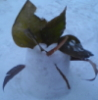 spiderress userpic