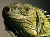 iguana123 userpic