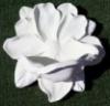 funky_magnolia