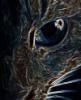ohlookcat userpic