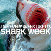 shark week || EVERY WEEK IS SHARK WEEK