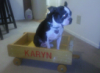Karyn: =( dog in the wagon