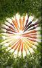 colnce_zemli userpic