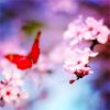 Senteehr: Butterfly
