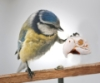 А попугайчика часом не Йориком звали?