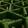 teadog1425: Maze