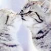 haruechan: Cat_kiss
