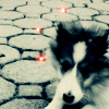 blubbercat userpic
