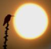 птичка и солнце