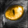 thewolfofflames userpic