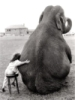 слоненок, slonik, slonik38, слоник, слон