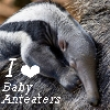 fififolle: Anteater - I love Baby Anteaters