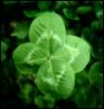 shan7 userpic