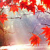 Red leaves and sunbeams