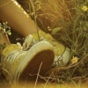 кедики желтые
