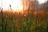 sleep_wind userpic