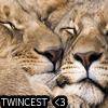 腐女: twincest