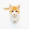 £stock - kitten
