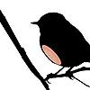audiobird userpic