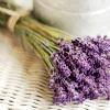 NATURE: flowers-lavender