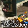 Serious Businessdog
