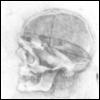 череп леонардо