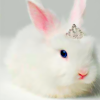 isohatemyself: bunny rabbit