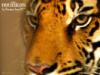 neil_duke userpic