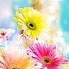 nakeisha userpic