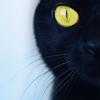 blackcat front