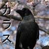 Kazushi: karasu