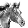 horsewoman userpic