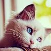 cat's waiting