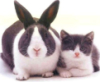 rabbit_cat_black_white