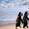 Vi: Penguins