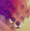 ghost fox