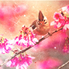 himawari55 userpic