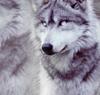 silvaewolf userpic