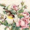 Dreaming little bird