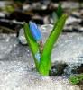 greenboby userpic