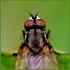 _2bboo userpic