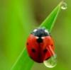 liduwa userpic