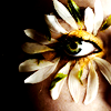 lishentricity userpic