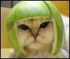 кошка в грейпфруте