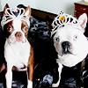 Genevieve: dog: clementine & hogwarts crowns