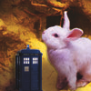 catyuy: Bunny with TARDIS