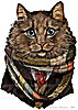 Doctor Who Cat - Four