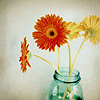 Amy: Stock - Gerberas in Jar
