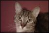 tuckercat2