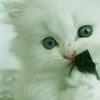 rileychaton userpic